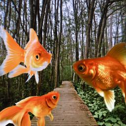 freetoedit fish sea forest goldfish