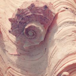 shell seashell conch conchshell seatreasures freetoedit