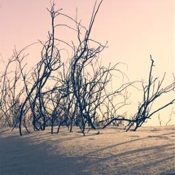 dunes beachdunes endoftheday sunsetlight driedbranches freetoedit
