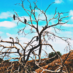 birdseyeview crows perching deadwood hikelife