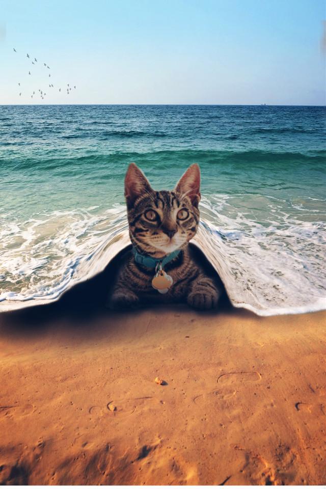 Watch tutorials👉https://youtu.be/pYv7z2qQO5E      #freetoedit #birds #dtsdk @dtsdk @picsart #mountains #art #beach #cats #cuteanimals #sleepunderroad #nature #sleepundercovers #sleepundersea #cute #coolpic💖 #awesome #doubleexposure #hide #remix #remixgalleries #cutest  #irckittylove #kittylove
