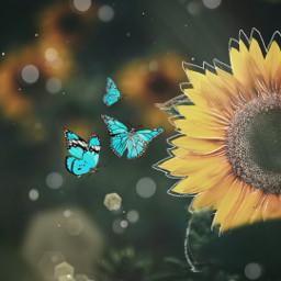 freetoedit edit magic loveit butterfly