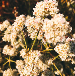 blossom flowerpower beauty hikelife caligirl