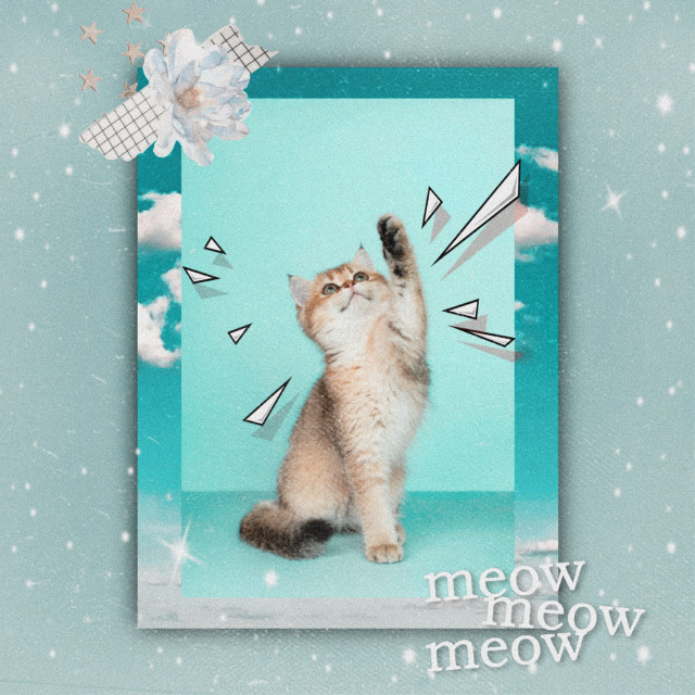 #freetoedit Replay for your cat! #aesthetic #aesthetics #retro #vintage #vintageaesthetic #vintagestyle #retrostyle #quote #quotes #quotation #text #texts #letter #letters #word #words #saying #frame #frames #cat #cats #catlover #pet #owner #animals #animal #paws #whiskers #flower #flowers #plant #plants #sky #love
