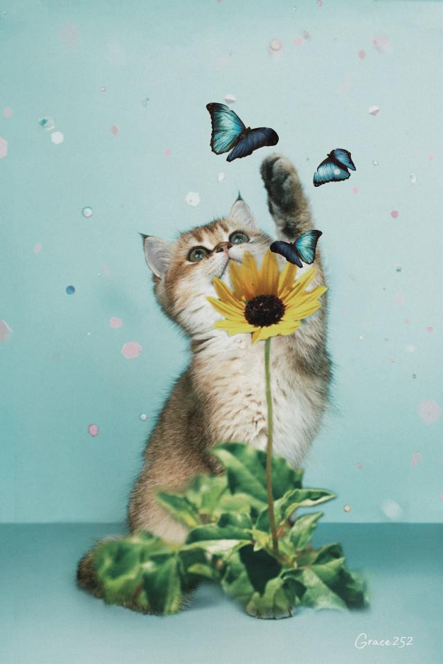 #freetoedit #cat #sunflower #catsofpicsart #glitterbrush #butterfly @freetoedit @macmmaya