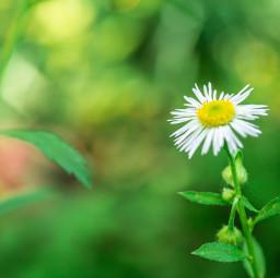 flower bokeh nature solitude beauty freetoedit