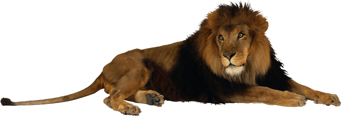 freetoedit lion leo lioness leoseason
