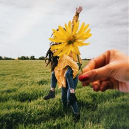 freetoedit цветок пиксарт желтый flower picsart yellow