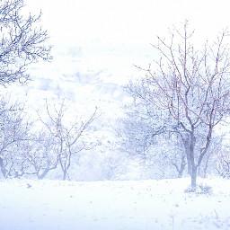 freetoedit snow winter turkey