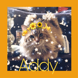 cats fluffy fluffycat emojicrown sparkle freetoedit