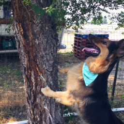 cute tree rv pallete germanshepherd