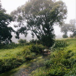 nature naturaleza freetoedit naturesbeauty naturephotography