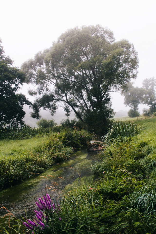 #nature #naturaleza  #freetoedit #naturesbeauty #naturephotography #river #water #trees #landscape #grass #green #flowers