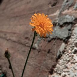 myphoto photography photographer photograph photooftheday freetoedit