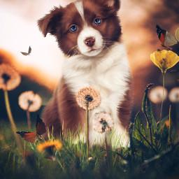 freetoedit photoremix puppylove fxeffects clipart
