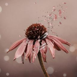 freetoedit flower fleur pink die
