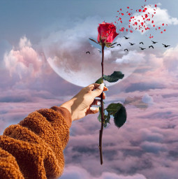 freetoedit rose flower flowers cloud