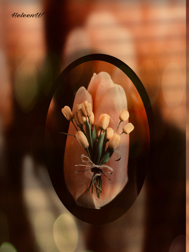 #interesting #art #flower #shadoweffect #shadowmask #goldenhour #editedbyme #tulips #freetoedit