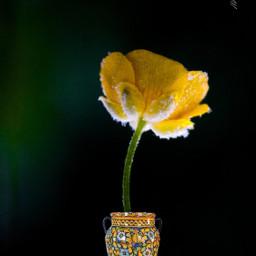 picsartmaster floral minimalism simple madewithpicsart freetoedit