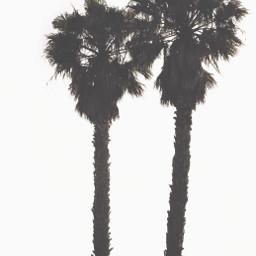 minimalism minimalisminnature palmtrees simplicity silhouettes freetoedit