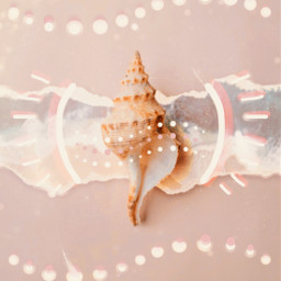 freetoedit conch conchshell shell seashell sea beach pink lightpink ocean dots pinkaesthetic dot ircseatreasure seatreasure