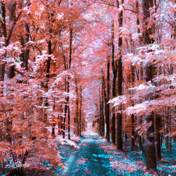 colorful nature hue undefined forest myedit peaceful freetoedit