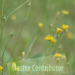 mastercontributor masterstoryteller picsart masterprogram flowers wildflowers freetoedit