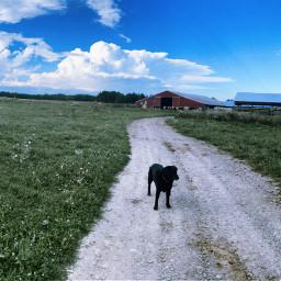 mere2020 lab blacklab clouds sky farm barn grass road dog cows blue green red farmlife