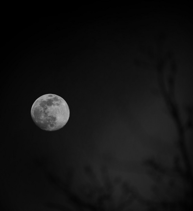 🖤  Its just the Moon, But I'm always in love with it 😌  Good night friends 😴  #freetoedit #photography #themoon #boughs #moonlover #silhouette  #moonlight #background #blackandwhite #picsartfilter