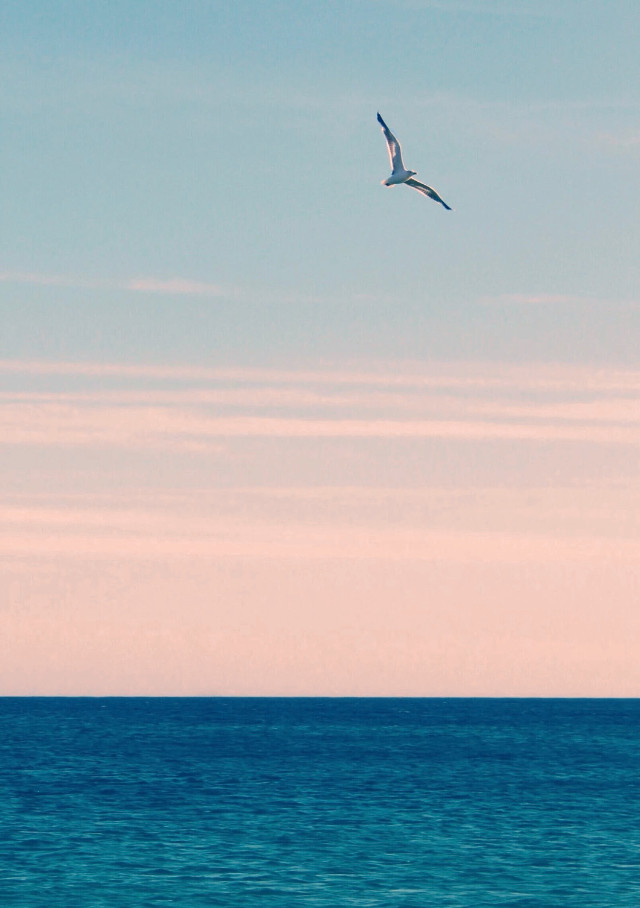 #nature #seaview #horizon #skyandclouds #morningsunriselight #seagullinflight #summertime #beachvibes #naturephotography                                                                    #freetoedit