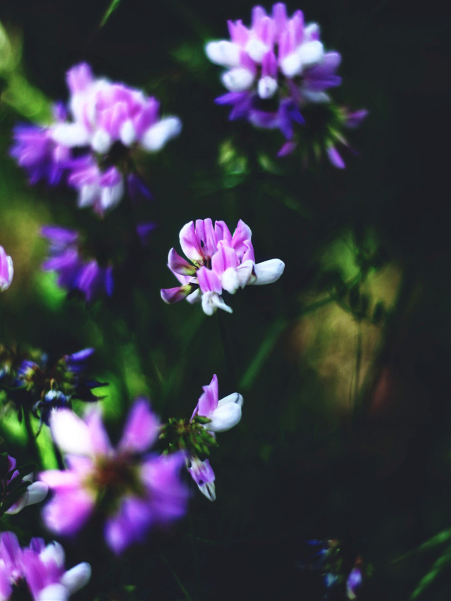 🖤  #myphotography #nature #flowers #flower #plants #photography #background #freetoedit