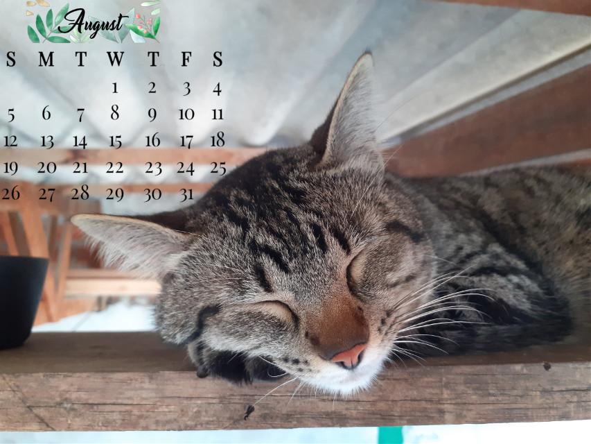 #freetoedit #mycatfriend 🐾🍃 #calendar2020 #august2020