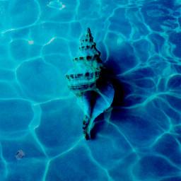 freetoedit ocean oceanfloor sea seafloor water seashell ircseatreasure seatreasure