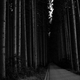 blackandwhite photography nature forest bayern trees naturelover mystery freetoedit
