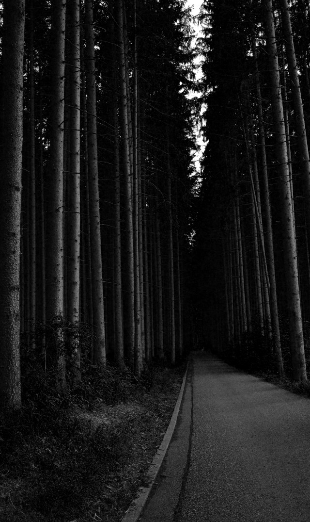 #blackandwhite #photography #nature #forest #bayern #trees #naturelover #mystery #freetoedit