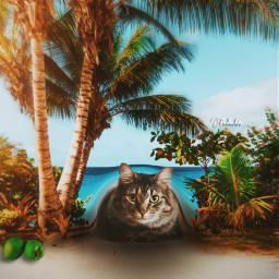 freetoedit manipulation madewithpicsart surreal creative cat under summer beach colochis89@picsart colochis89