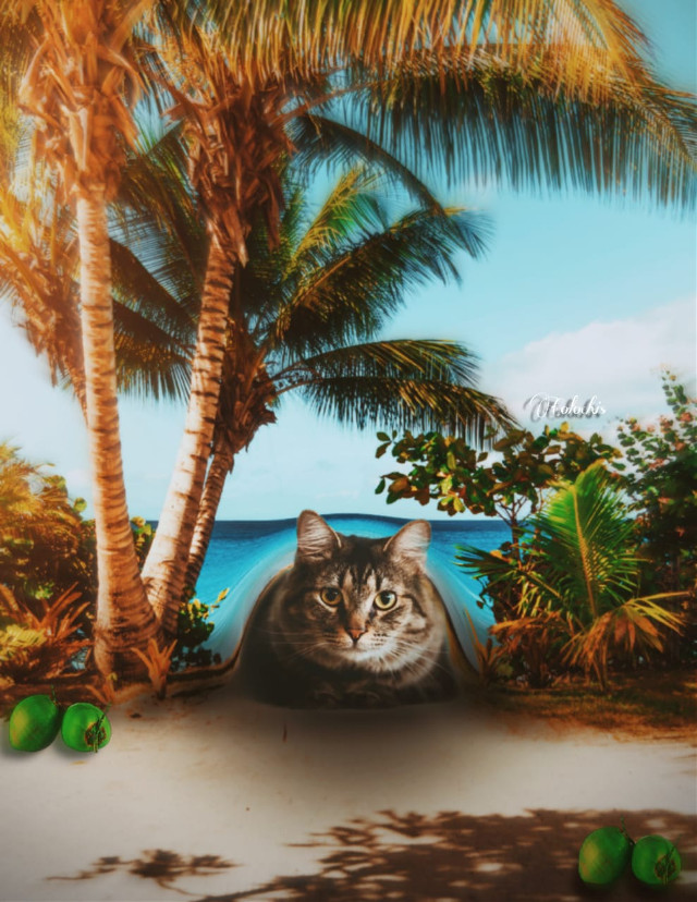 #freetoedit #manipulation#madewithpicsart #surreal #creative #manipulation #cat#Under #Summer#Beach #colochis89@picsart  😅🐱🌊🏖️❤️ Happy Sunday to all 😊 💕 🦋 🍃👋🏻