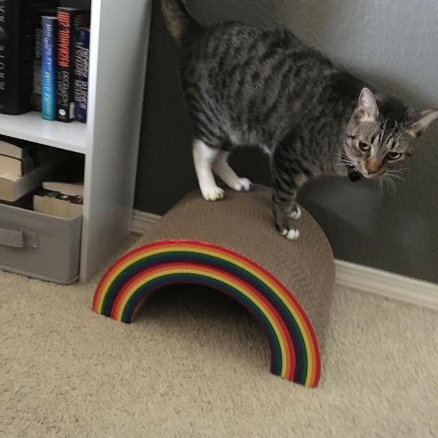 Say hello to Rex... 🐱 Somewhere Over the Rainbow...🌈 https://youtu.be/2rd8VktT8xY  #cat #petsofpicsart #kitty #Rex #books #bookshelf #somewhereovertherainbow #beautifulcay #myphotography