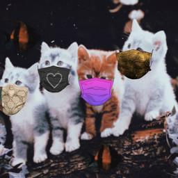 freetoedit cute cats adorable kawaii kittys
