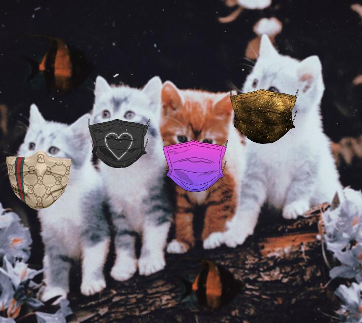 #freetoedit #cute #cats #adorable #kawaii #kittys