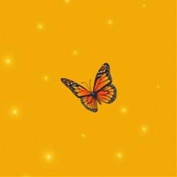 freetoedit orange🧡🧡🧡🧡 aesthetic butterfly monarch orange
