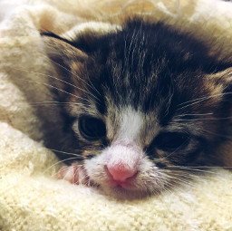 mama mode unweaned kitten nursing workmode shelter precious cuddlebuddy love mood mymind myeye bchez photography edit