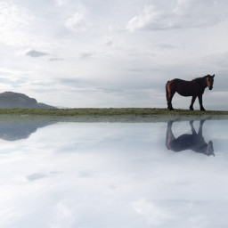 horse reflection freetoedit pcwaterreflection waterreflection