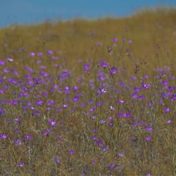 freetoedit flowers floralbackground summer summerflowers summerbackground