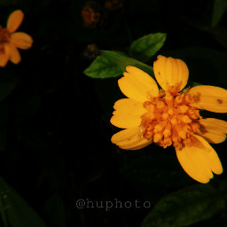 flower cute aesthetic yellow freetoedit