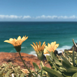 nature plantsandflowers flowers wildflowers ontheedgeofthecliff seaview horizon blueskywithclouds summertime gooddaysgoodvibes peacefulview lowangleshot naturephotography freetoedit