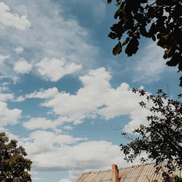 myphotography nature trees sky clouds background phonephotography freetoedit