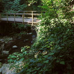 freetoedit myphotography nature wood trees creek walkway