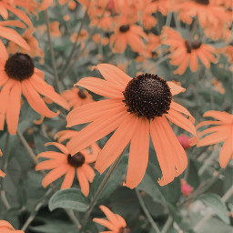 freetoedit daisysquad