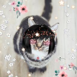 starcat freetoedit